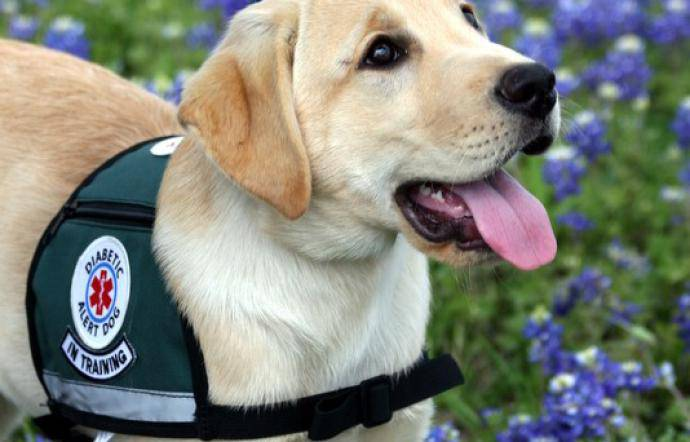 i cani anti diabete