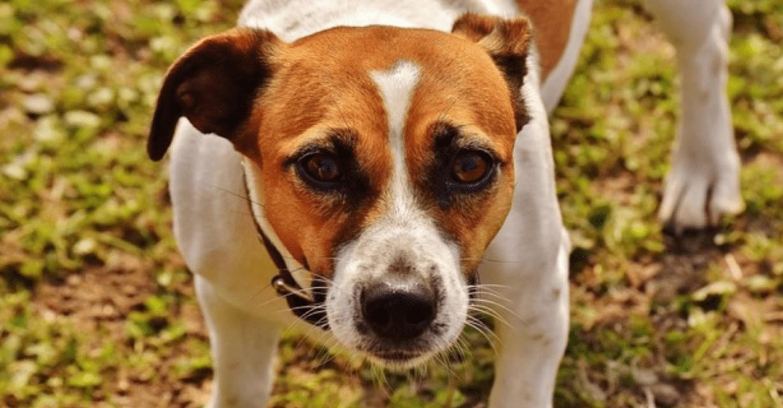 Rissa al pub tra un 39 anatra e un cane era solita - Quando fare il primo bagno al cane ...