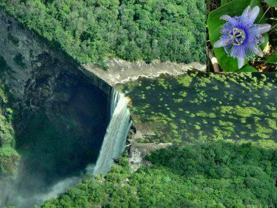 guyana foresta