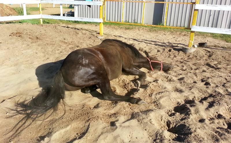 la rogna nel cavallo