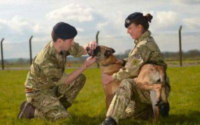 cane soldato