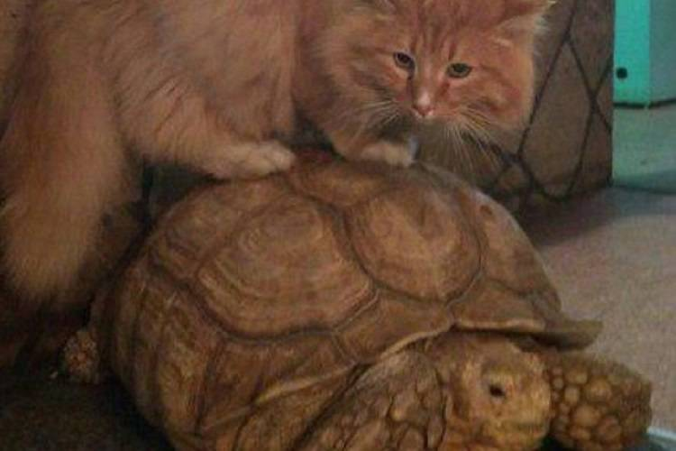 Tartarughe in fuga le ferma il gatto pagnotta foto for Tartarughe in amore