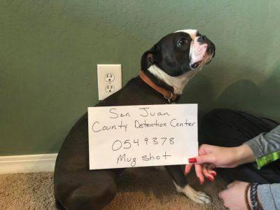 cane arrestato