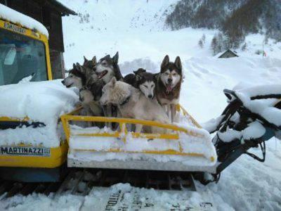 sleeddog