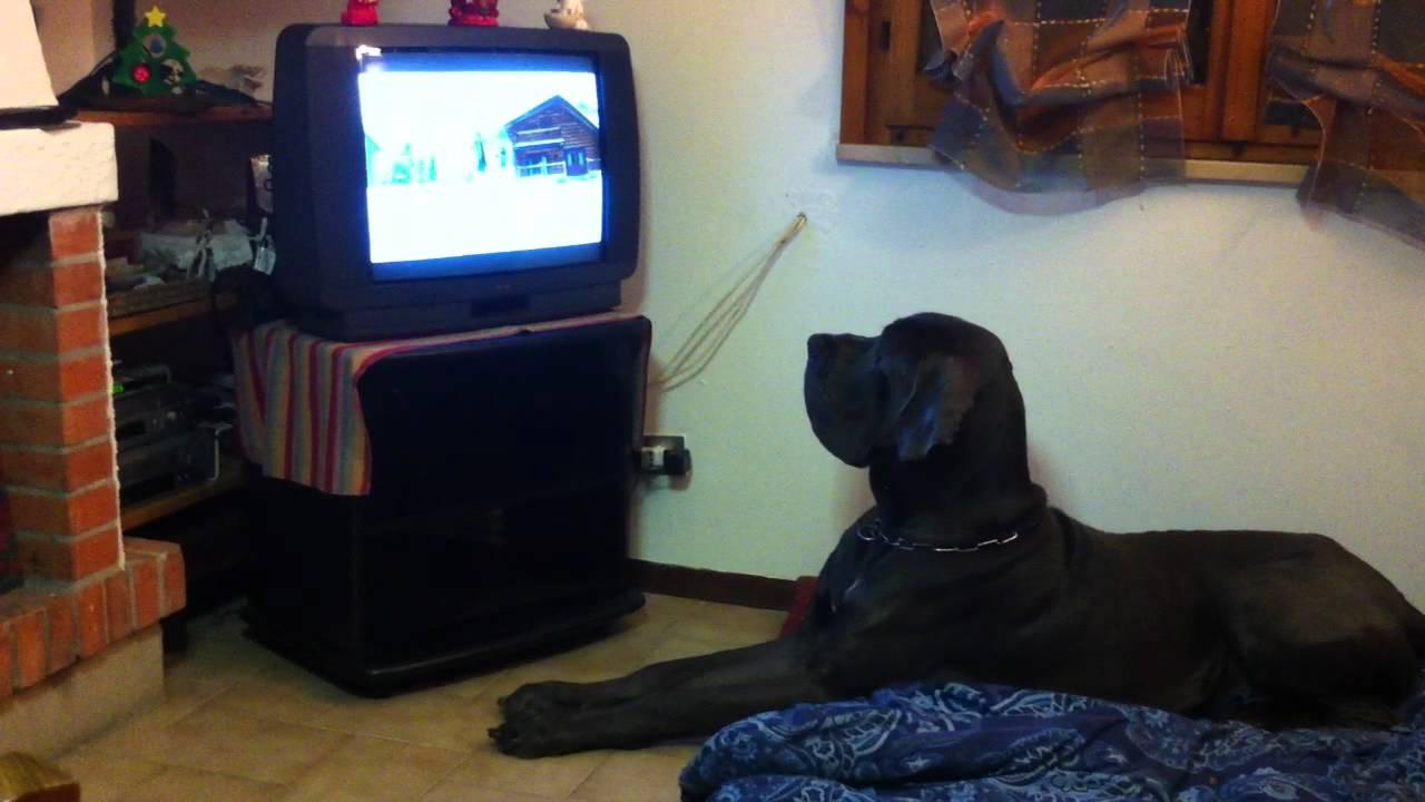 Cosa vedono i cani quando guardano la televisione - Cane allo specchio ...
