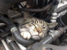 gatto nel motore