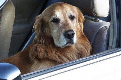 cane guida