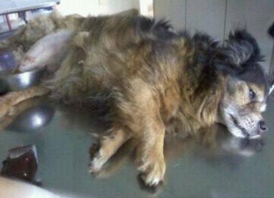 cane gettato da un ponte