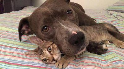 Cane Gatti E Topo Amici Per La Pelle è Possibile E Vivono Tutti