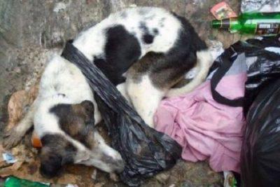 Cane nella spazzatura