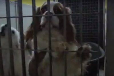 Cani allevati in cassonetti della frutta e acquari, maxi sequestro nel Veronese
