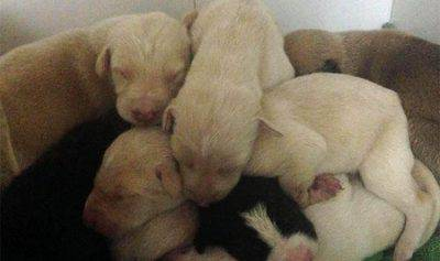 cuccioli impiccati