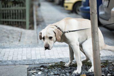 deiezioni dei cani