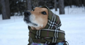 animali freddo