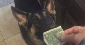 cane col sussidio