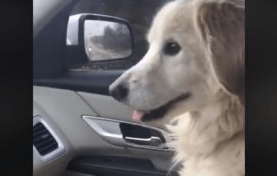gratitudine cane