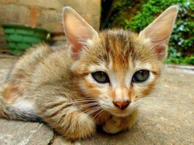 brescia gattino picchiato