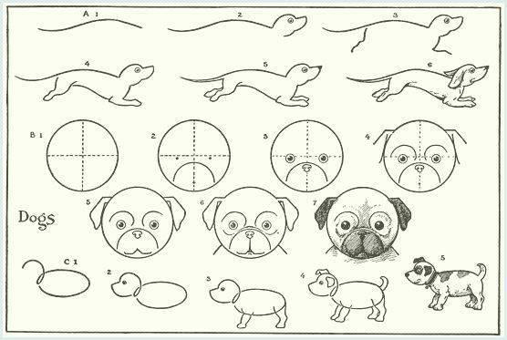 Come Disegnare Un Cane Simpatico Realistico Facilmente