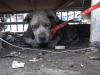 cane anziano abbandonato