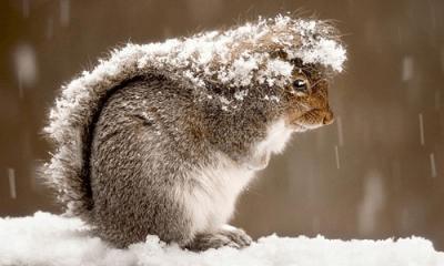 animali gelo