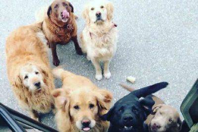 corrieri ups cani
