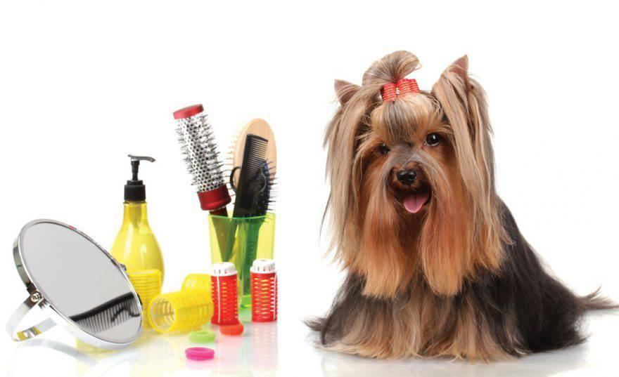 La cura del cane in casa