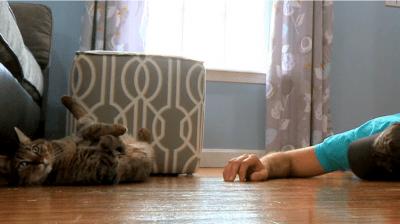 reazione gatto