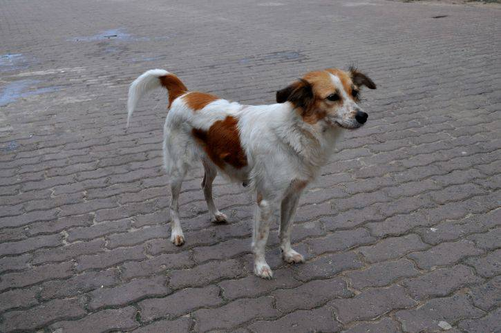 i am a street dog Pets in mexico questions about semi-wild street dogs are a big problem i am interested in living in mexico for a year or so my goal is to become fluent in.