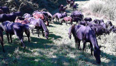 sequestri cavalli