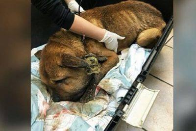 cane vittima abusi