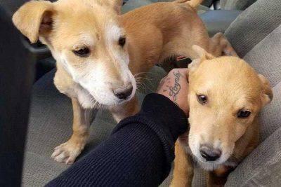 due fratelli trovano cuccioli