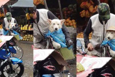 amore cani protegge moto