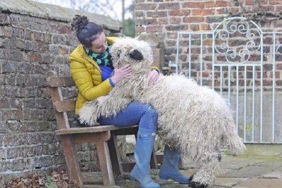 storie divertenti pecora cane