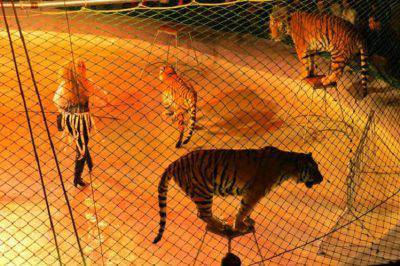 animali selvatici circhi