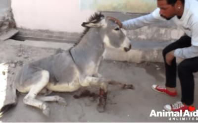 video salvataggio animali