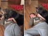 cani guida autismo
