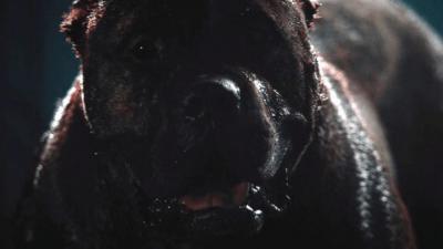 film cani