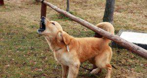 cane guardia
