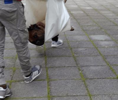 combattimento cani