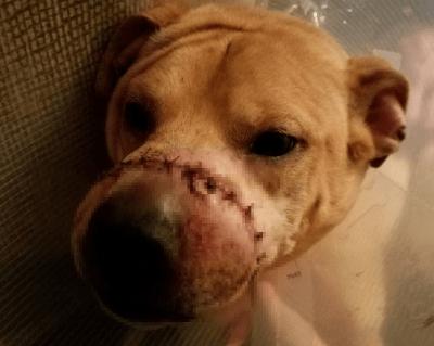 eutanasia cani