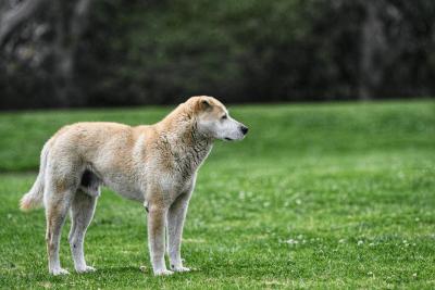 cane randagio