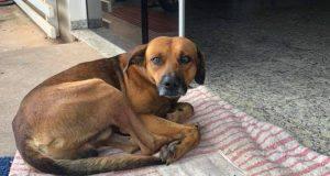 impotenza appresa cane