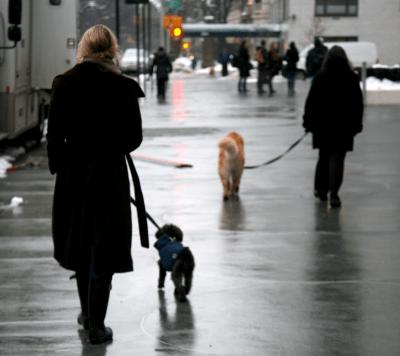 seggio elettorale cani