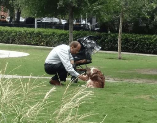 affetto cani