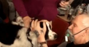 malato terminale cane
