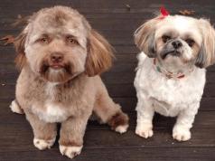 cani umani