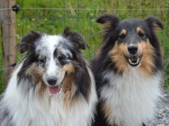 oroscopo cani