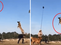 salto cani