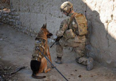 Cani in guerra