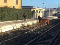 cavalli fuga